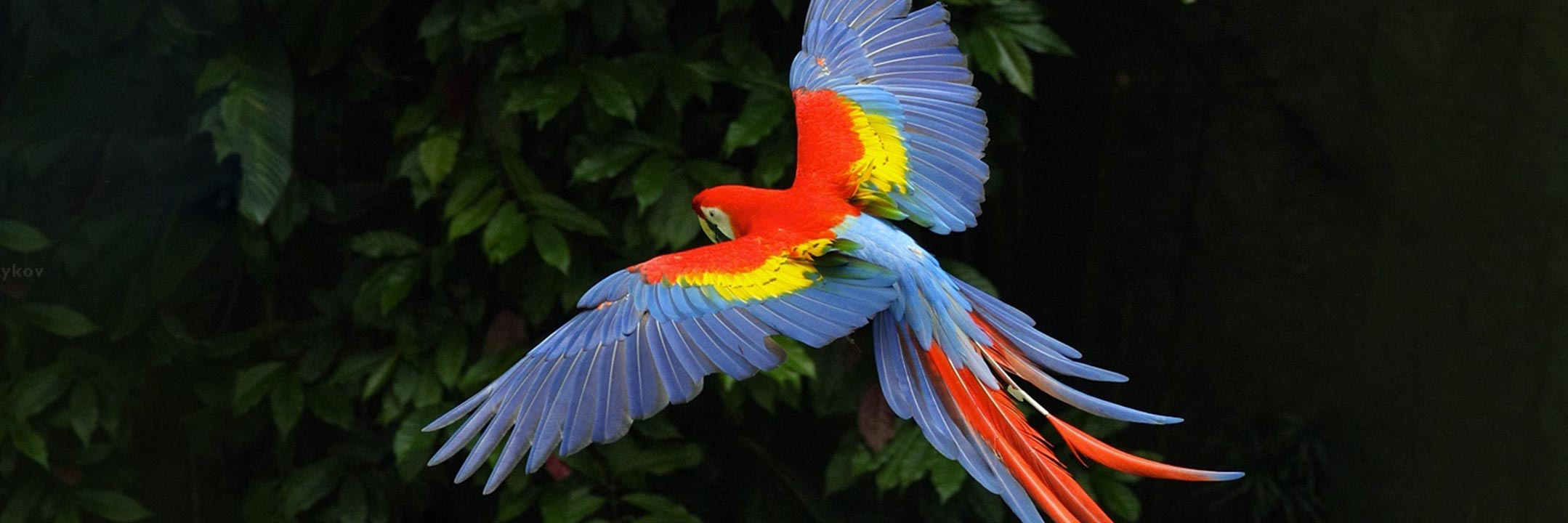 birds04