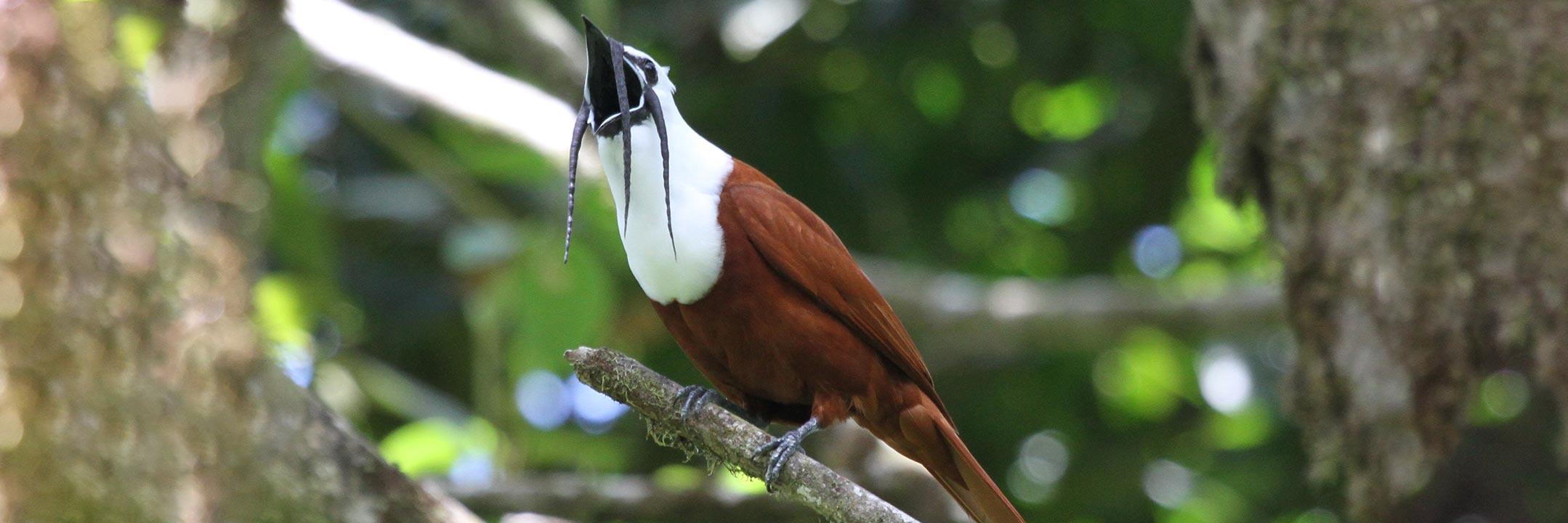 birds10